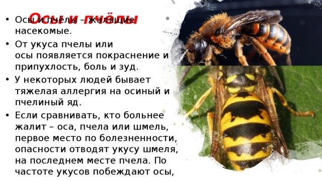 Осы и пчёлы