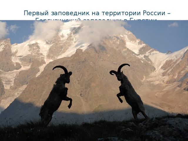 Первый заповедник на территории России – Баргузинский заповедник в Бурятии.