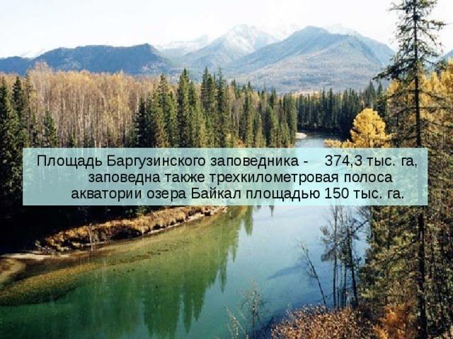 Площадь Баргузинского заповедника - 374,3 тыс. га, заповедна также трехкилометровая полоса акватории озера Байкал площадью 150 тыс. га.