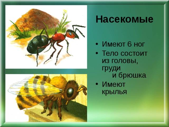 Насекомые Имеют 6 ног Тело состоит из головы, груди и брюшка Имеют крылья