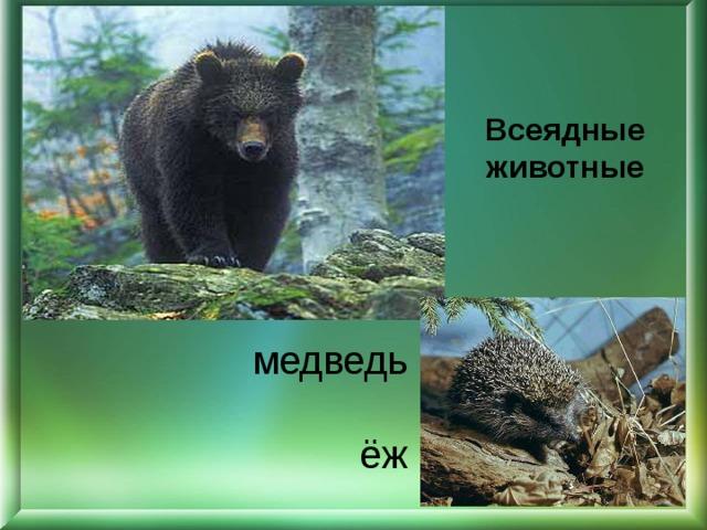 Всеядные животные медведь   ёж