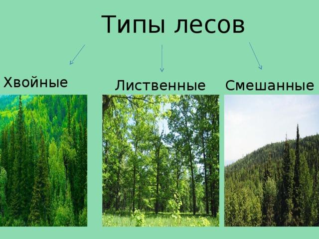 Типы лесов Хвойные  Лиственные Смешанные