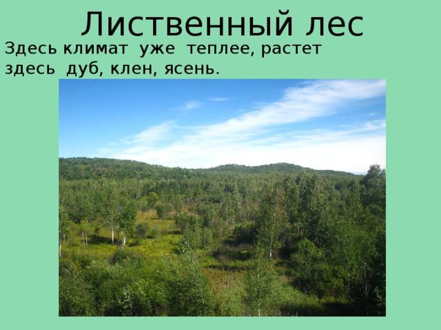 Лиственный лес Здесь климат уже теплее, растет здесь дуб, клен, ясень.