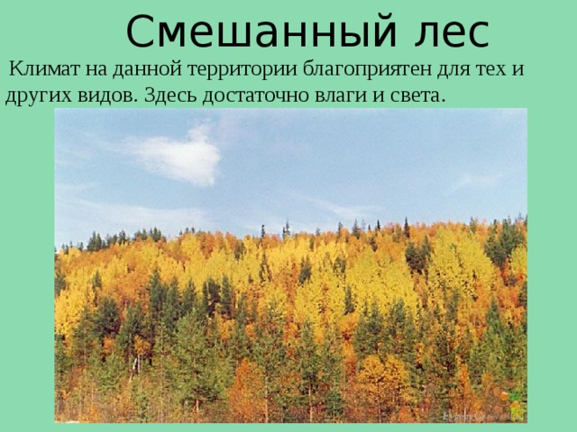Смешанный лес  Климат на данной территории благоприятен для тех и других видов. Здесь достаточно влаги и света.
