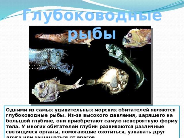 Глубоководные рыбы Одними из самых удивительных морских обитателей являются глубоководные рыбы. Из-за высокого давления, царящего на большой глубине, они приобретают самую невероятную форму тела. У многих обитателей глубин развиваются различные светящиеся органы, помогающие охотиться, узнавать друг друга или защищаться от врагов.