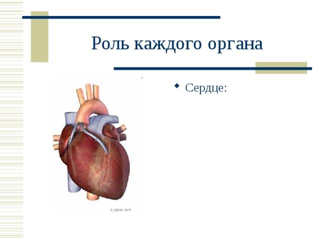 Роль каждого органа