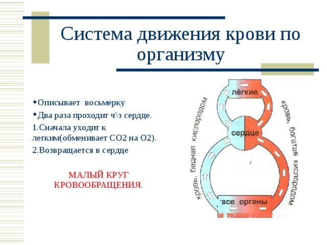 Система движения крови по организму Описывает восьмерку Два раза проходит ч\з сердце. 1.Сначала уходит к легким(обменивает СО2 на О2). 2.Возвращается в сердце МАЛЫЙ КРУГ КРОВООБРАЩЕНИЯ .