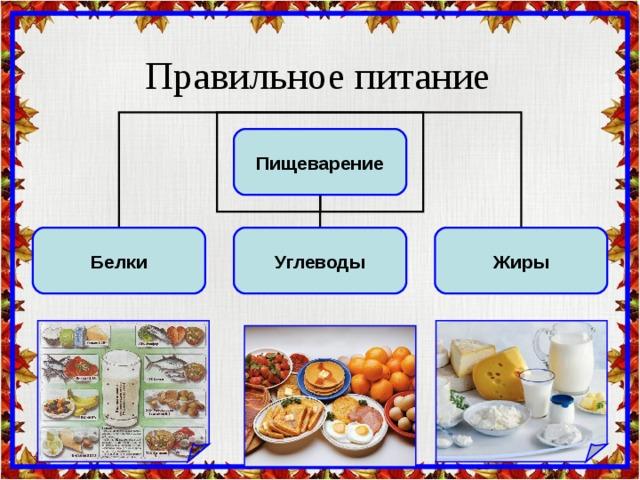 Правильное питание  Пищеварение Белки Углеводы Жиры