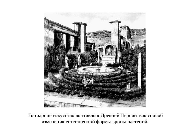 Топиарное искусство возникло в Древней Персии как способ изменения естественной формы кроны растений.