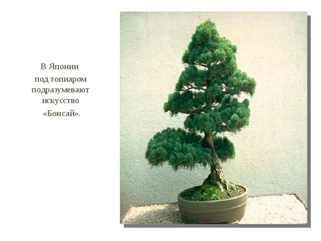 В Японии под топиаром подразумевают искусство  «Бонсай».