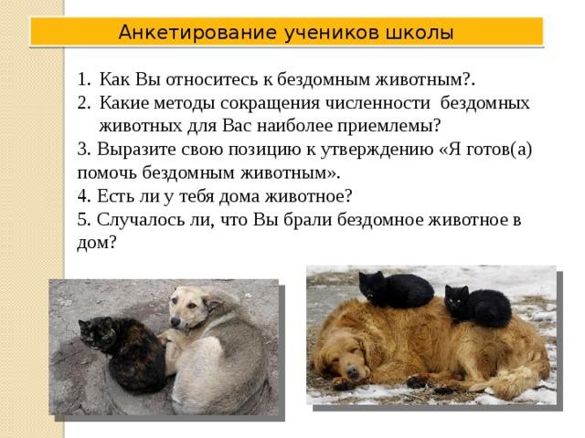 Анкетирование учеников школы Как Вы относитесь к бездомным животным?. Какие методы сокращения численности бездомных животных для Вас наиболее приемлемы? 3. Выразите свою позицию к утверждению «Я готов(а) помочь бездомным животным». 4. Есть ли у тебя дома животное? 5. Случалось ли, что Вы брали бездомное животное в дом?