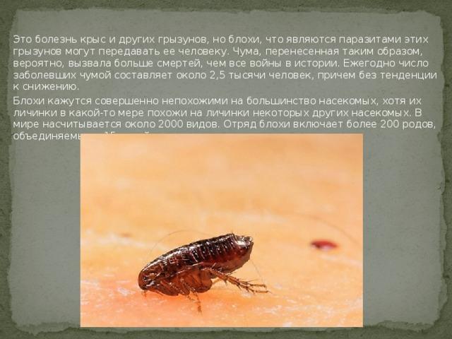 Это болезнь крыс и других грызунов, но блохи, что являются паразитами этих грызунов могут передавать ее человеку. Чума, перенесенная таким образом, вероятно, вызвала больше смертей, чем все войны в истории. Ежегодно число заболевших чумой составляет около 2,5 тысячи человек, причем без тенденции к снижению. Блохи кажутся совершенно непохожими на большинство насекомых, хотя их личинки в какой-то мере похожи на личинки некоторых других насекомых. В мире насчитывается около 2000 видов. Отряд блохи включает более 200 родов, объединяемых в 15 семейств.