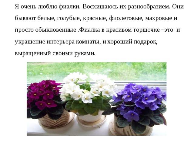 Я очень люблю фиалки. Восхищаюсь их разнообразием. Они бывают белые, голубые, красные, фиолетовые, махровые и просто обыкновенные .Фиалка в красивом горшочке –это и украшение интерьера комнаты, и хороший подарок, выращенный своими руками.
