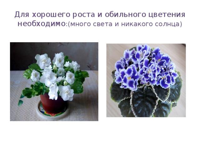 Для хорошего роста и обильного цветения необходимо :(много света и никакого солнца)