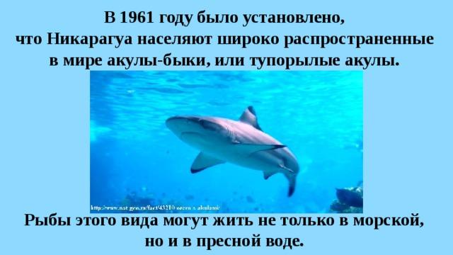 В1961 году было установлено,  что Никарагуа населяют широко распространенные  вмире акулы-быки, или тупорылые акулы. Рыбы этого вида могут жить нетолько вморской, но ивпресной воде.