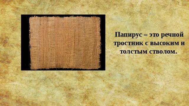 Папирус – это речной тростник с высоким и толстым стволом.