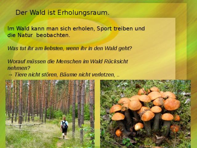 Der Wald ist Erholungsraum. Im Wald kann man sich erholen, Sport treiben und die Natur beobachten. Was tut ihr am liebsten, wenn ihr in den Wald geht? Worauf müssen die Menschen im Wald Rücksicht nehmen? → Tiere nicht stören, Bäume nicht verletzen, ..