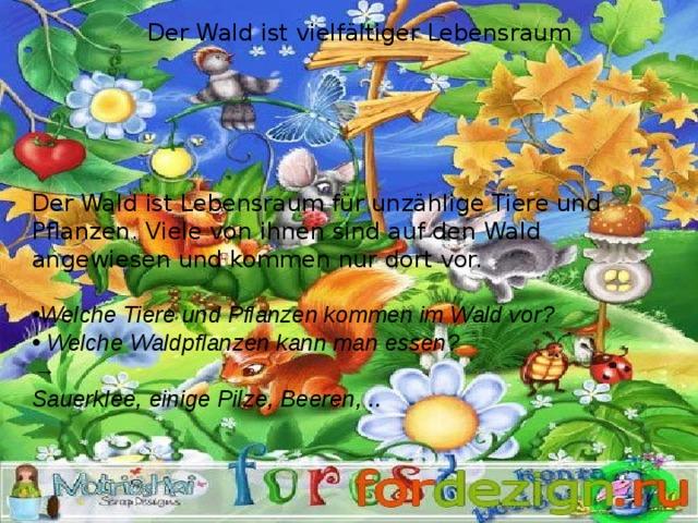 Der Wald ist vielfältiger Lebensraum Der Wald ist Lebensraum für unzählige Tiere und Pflanzen. Viele von ihnen sind auf den Wald angewiesen und kommen nur dort vor. Welche Tiere und Pflanzen kommen im Wald vor?  Welche Waldpflanzen kann man essen? → Sauerklee, einige Pilze, Beeren, ..