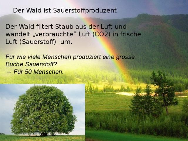 """Der Wald ist Sauerstoffproduzent Der Wald filtert Staub aus der Luft und wandelt """"verbrauchte"""" Luft (CO2) in frische Luft (Sauerstoff) um. Für wie viele Menschen produziert eine grosse Buche Sauerstoff? → Für 50 Menschen."""