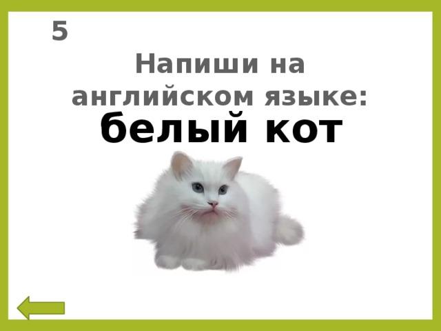 5 Напиши на английском языке: белый кот