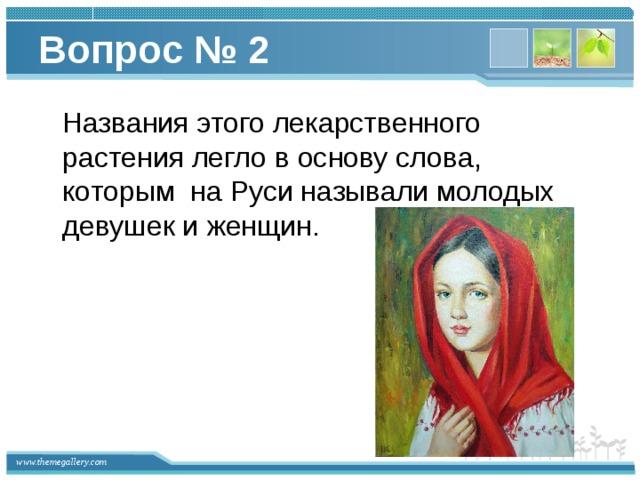 Вопрос № 2  Названия этого лекарственного растения легло в основу слова, которым на Руси называли молодых девушек и женщин.