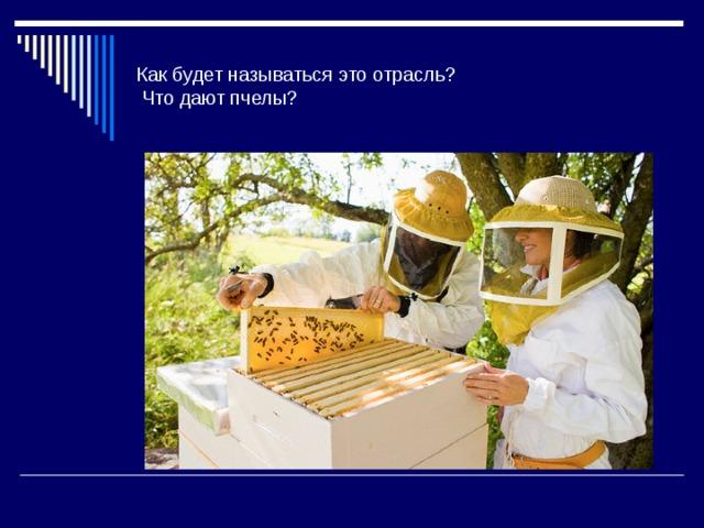 Как будет называться это отрасль?  Что дают пчелы?