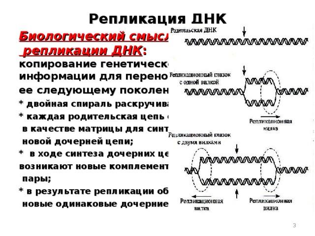 Репликация ДНК Биологический смысл  репликации ДНК : копирование генетической информации для переноса ее следующему поколению : * двойная спираль раскручивается; * каждая родительская цепь служит  в качестве матрицы для синтеза  новой дочерней цепи; * в ходе синтеза дочерних цепей возникают новые комплементарные  пары; * в результате репликации образуются две  новые одинаковые дочерние цепи.