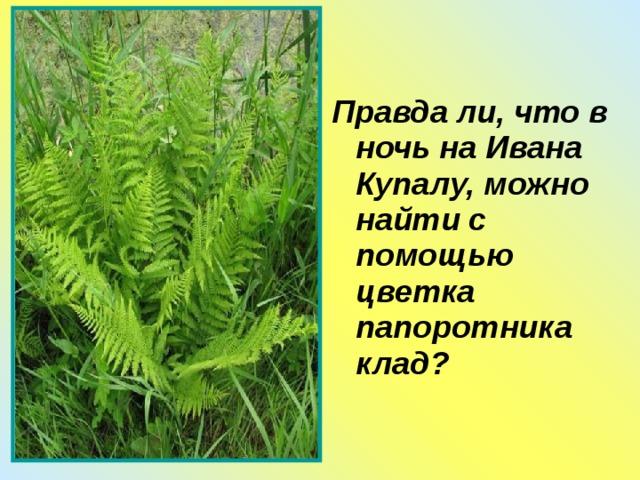 Правда ли, что в ночь на Ивана Купалу, можно найти с помощью цветка папоротника клад?