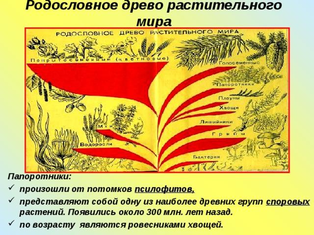 Родословное древо растительного мира Папоротники: