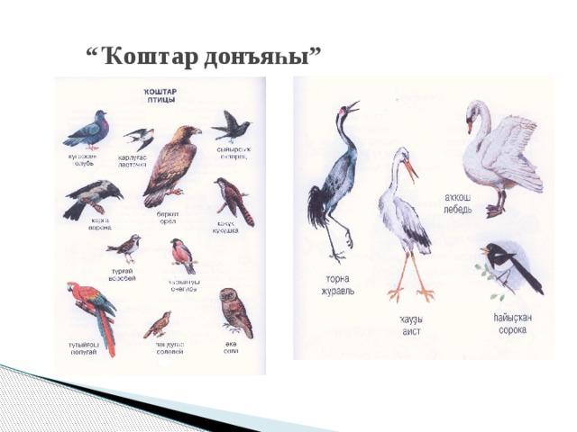 """"""" Ҡоштар донъяһы"""""""