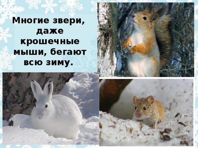 Многие звери, даже крошечные мыши, бегают всю зиму.