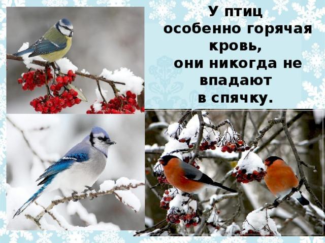 У птиц особенно горячая кровь, они никогда не впадают в спячку.