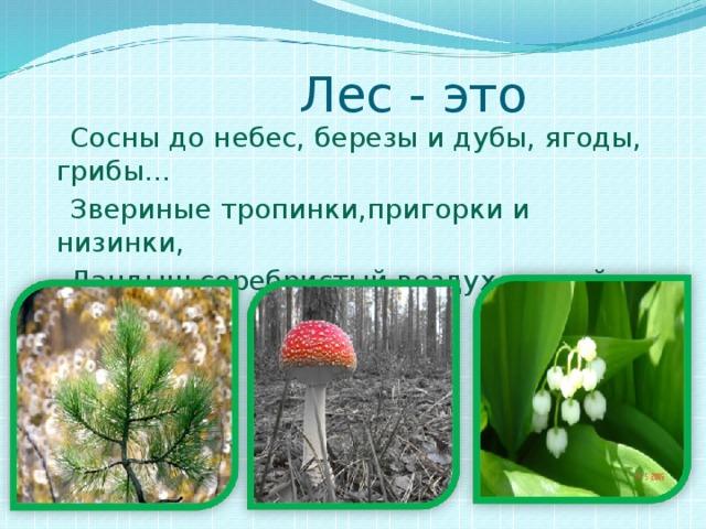 Лес - это  Сосны до небес, березы и дубы, ягоды, грибы…  Звериные тропинки,пригорки и низинки,  Ландыш серебристый,воздух чистый – чистый.