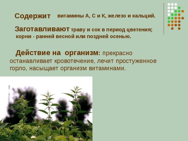 Содержит  витамины А, С и К, железо и кальций.  Заготавливают  траву и сок в период цветения;  корни - ранней весной или поздней осенью.  Действие на организм : прекрасно останавливает кровотечение, лечит простуженное горло, насыщает организм витаминами.