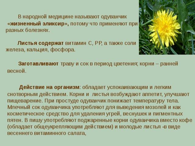 В народной медицине называют одуванчик  «жизненный эликсир», потому что применяют при разных болезнях.  Листья содержат витамин С, РР, а также соли железа, кальция, фосфора.  Заготавливают траву и сок в период цветения; корни – ранней весной.  Действие на организм : обладает успокаивающим и легким снотворным действием. Корни и листья возбуждают аппетит, улучшают пищеварение. При простуде одуванчик понижает температуру тела. Млечный сок одуванчика употребляют для выведения мозолей и как косметическое средство для удаления угрей, веснушек и пигментных пятен.  В пишу употребляют поджаренные корни одуванчика вместо кофе (обладает общеукрепляющим действием) и молодые листья -в виде весеннего витаминного салата,