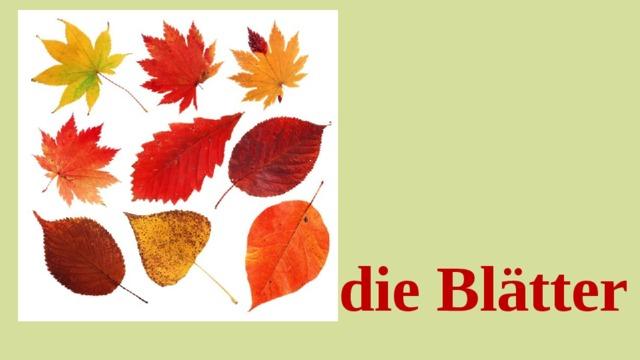die Blätter