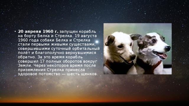 20 апреля 1960 г. запущен корабль на борту Белка и Стрелка. 19 августа 1960 года собаки Белка и Стрелка стали первыми живыми существами, совершившими суточный орбитальный полёт и благополучно вернувшимися обратно. За это время корабль совершил 17 полных оборотов вокруг Земли. Через некоторое время после приземления Стрелка принесла здоровое потомство — шесть щенков.