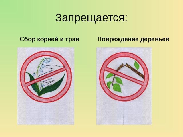 Запрещается: Сбор корней и трав Повреждение деревьев