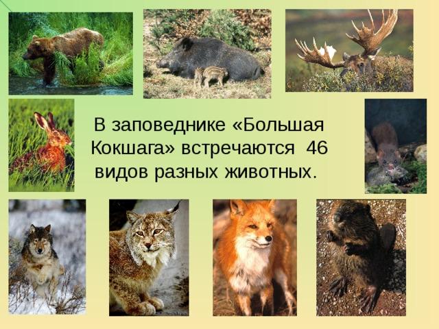 В заповеднике «Большая Кокшага» встречаются 46 видов разных животных.