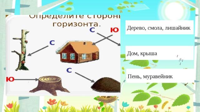Введите сюда текст вопроса Дерево, смола, лишайник Дом, крыша Пень, муравейник