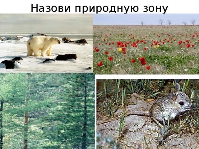 Назови природную зону