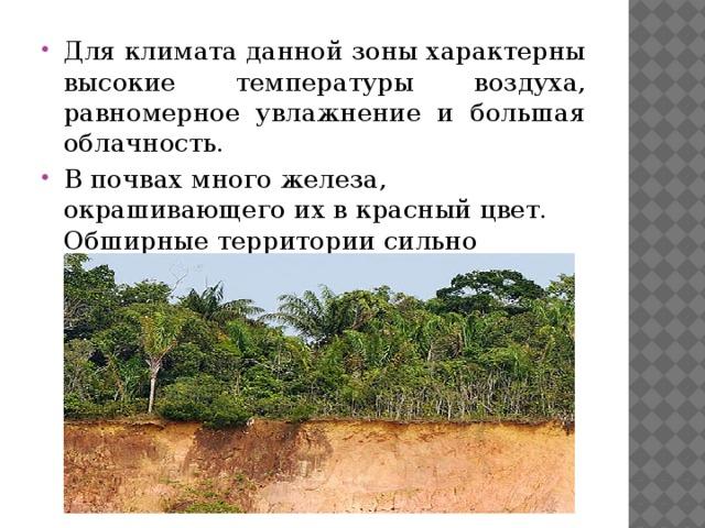 Для климата данной зоны характерны высокие температуры воздуха, равномерное увлажнение и большая облачность. В почвах много железа, окрашивающего их в красный цвет. Обширные территории сильно заболочены.