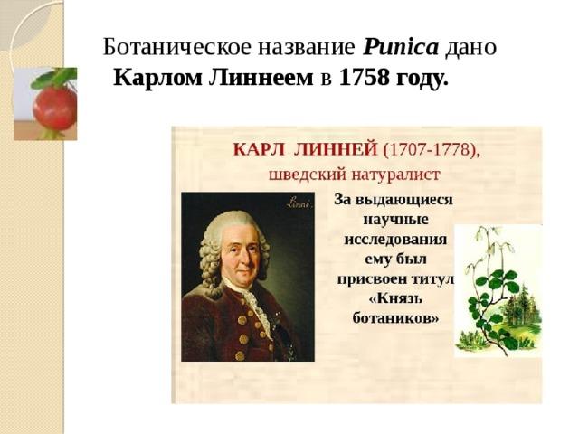 Ботаническое название Punica дано Карлом Линнеем в 1758 году.
