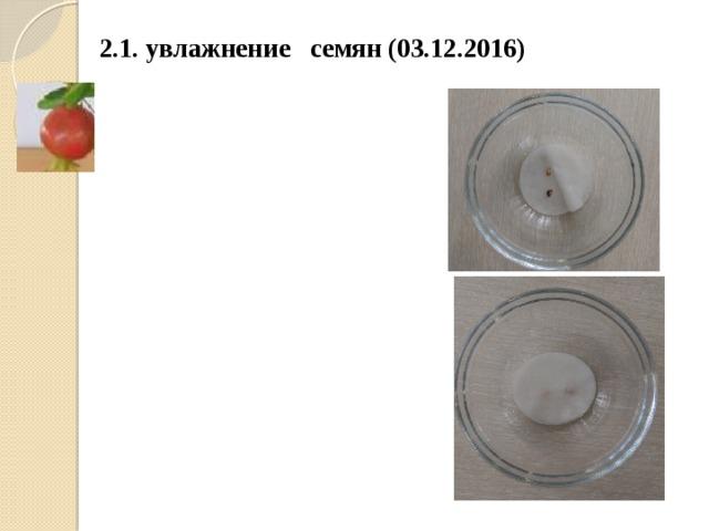 2.1. увлажнение семян (03.12.2016)
