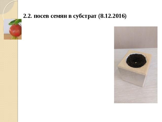 2.2. посев семян в субстрат (8.12.2016)