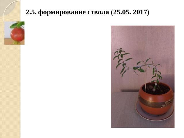 2.5. формирование ствола (25.05. 2017)