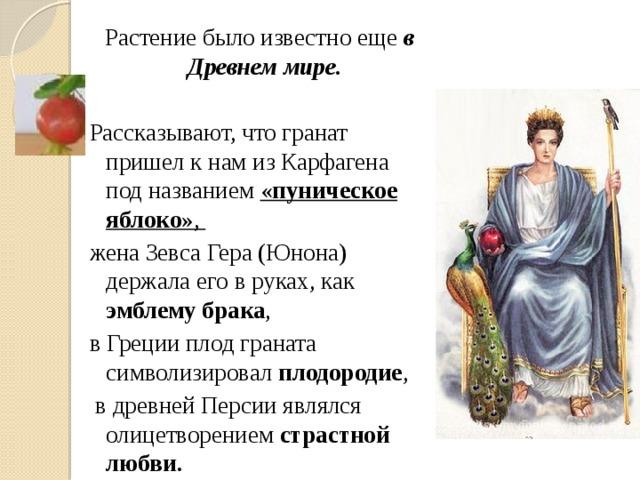 Растение было известно еще в Древнем мире. Рассказывают, что гранат пришел к нам из Карфагена под названием «пуническое яблоко» , жена Зевса Гера (Юнона) держала его в руках, как эмблему брака , в Греции плод граната символизировал плодородие ,  в древней Персии являлся олицетворением страстной любви.