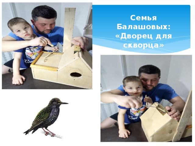 Семья Балашовых: «Дворец для скворца»