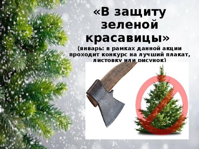 «В защиту зеленой красавицы» (январь: в рамках данной акции проходит конкурс на лучший плакат, листовку или рисунок)