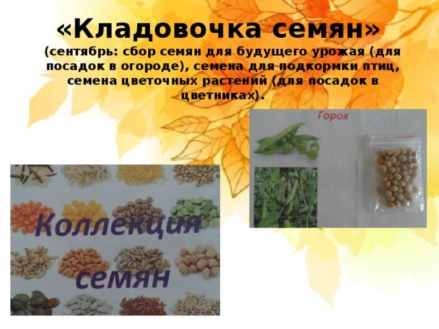 «Кладовочка семян» (сентябрь: сбор семян для будущего урожая (для посадок в огороде), семена для подкормки птиц, семена цветочных растений (для посадок в цветниках).